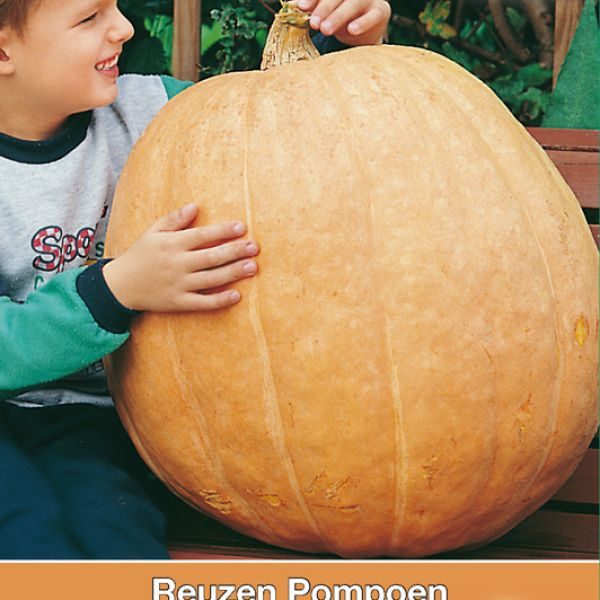 Cucurbita maxima 'Atlantic Giant'