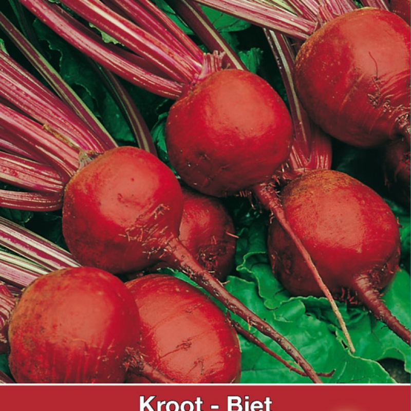 Biet - Kroot Kogel of Detroit 2