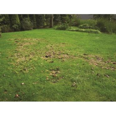 Aaltjes tegen engerlingen H 5 mln/10 m²