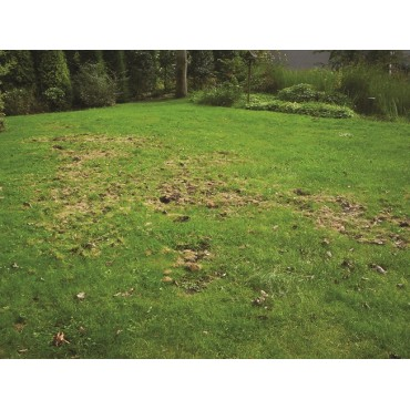 Aaltjes tegen engerlingen H 50 mln/100 m²