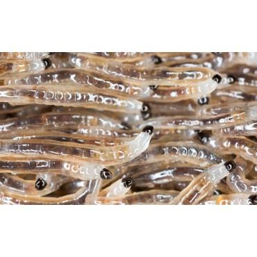 Aaltjes tegen larven varenrouwmug F 5 mln/10 m²