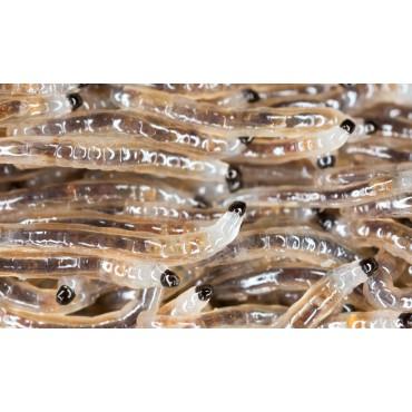 Aaltjes tegen larven varenrouwmug F 15 mln/30 m²