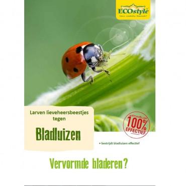 Lieveheersbeestjes Boerderij