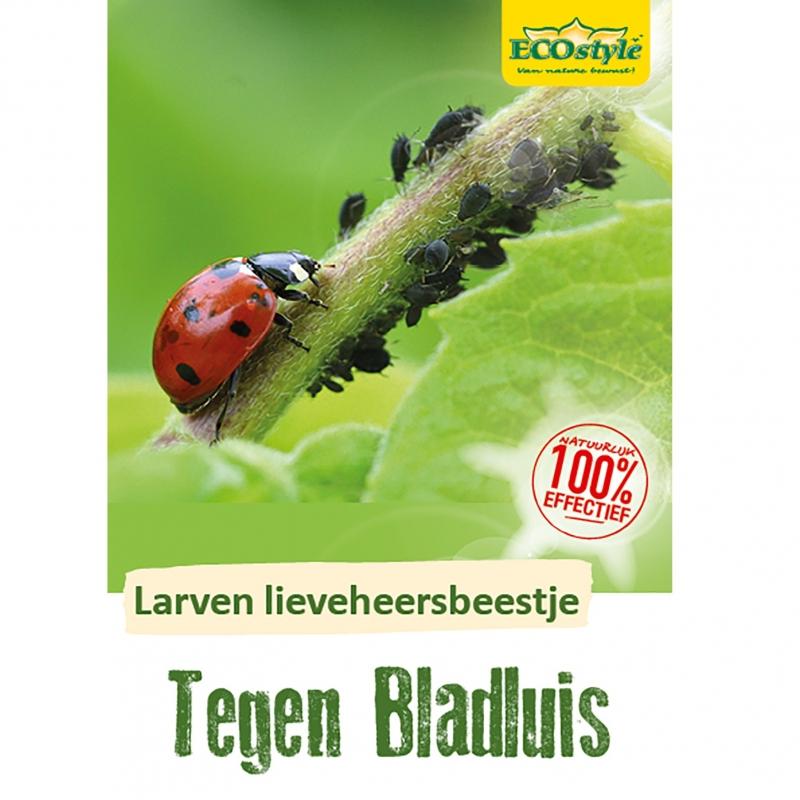 Larven lieveheersbeestje tegen bladluis 100 st.