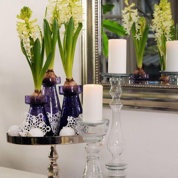 Geprepareerde hyacinten, wit