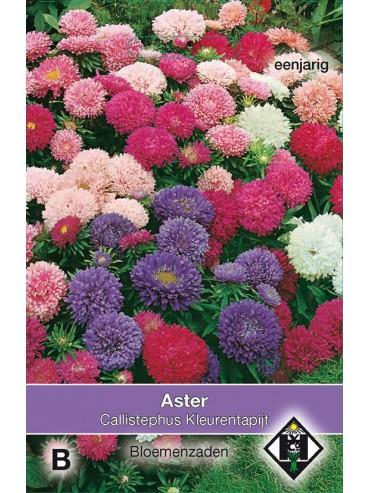Aster chinensis 'Kleurentapijt'