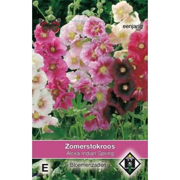 Alcea rosea annua 'Indian Spring'