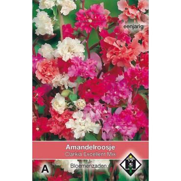 Clarkia unguiculata 'Excellent Mix'