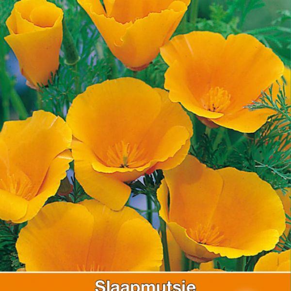Eschscholzia cal. 'Orange King'