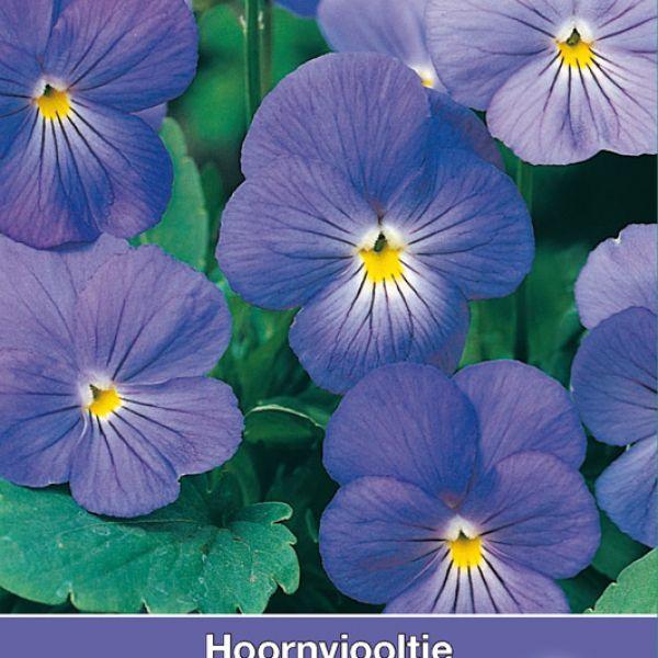 Viola cornuta 'Blue Perfection'