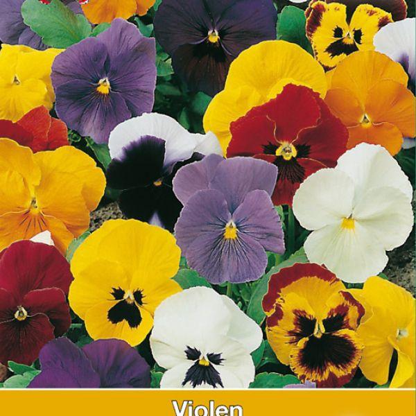Viola x wittrockiana 'Zwitserse Reuzen'