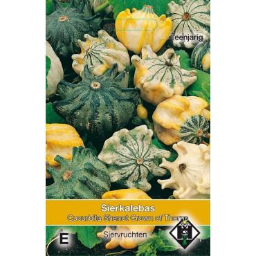 Cucurbita pepo 'Shenot Crown of Thorns'