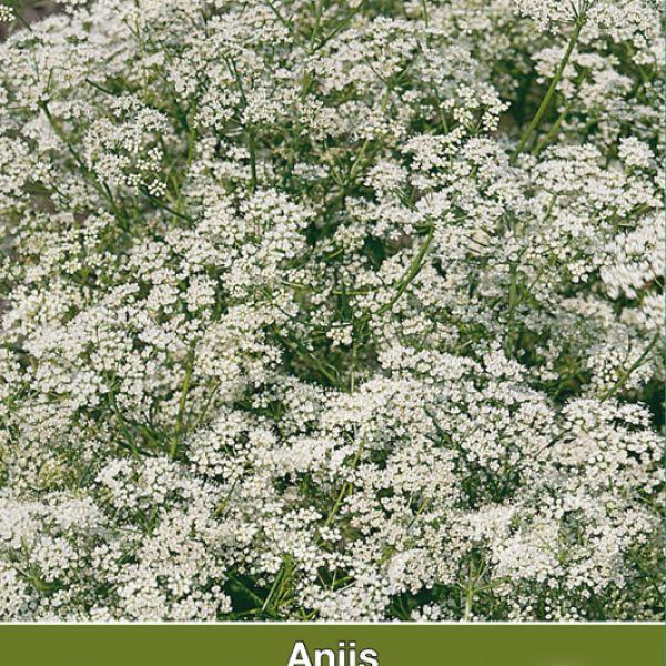 Anijs / Pimpinella anisem