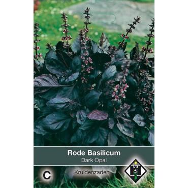 Rode Basilicum / Ocimum basilicum 'Dark Opal'