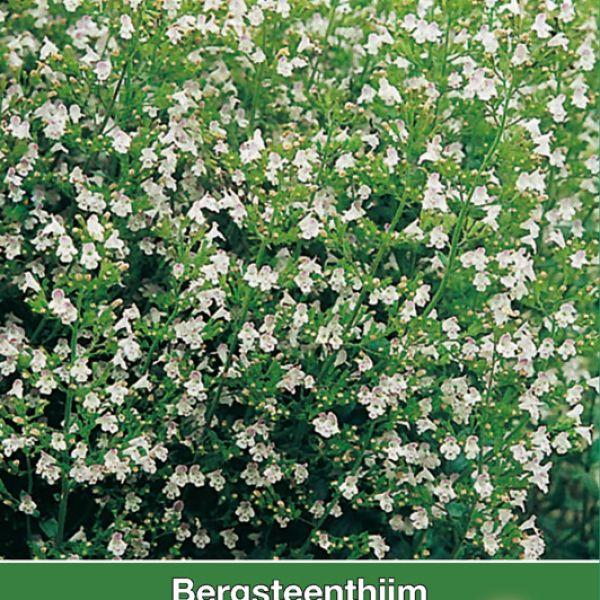 Bergsteen tijm / Calamintha nepeta