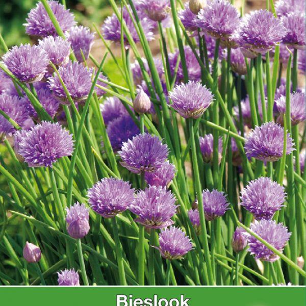 Bieslook / Allium schoenproasum