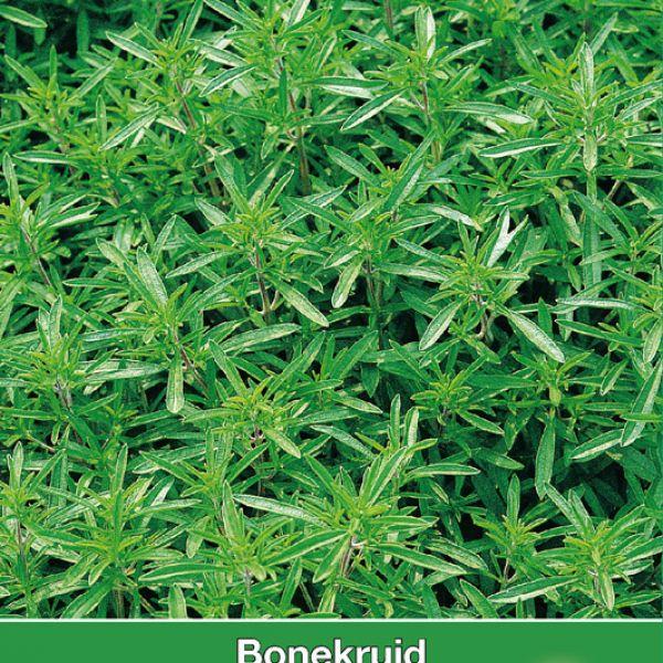 Bonekruid / Satureja hortensis