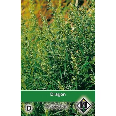 Dragon / Artemisia dranunulus