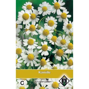 Kamille / Chamomilla recuttia
