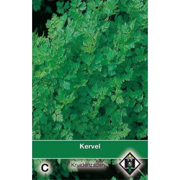 Kervel / Anthriscus cerefolium
