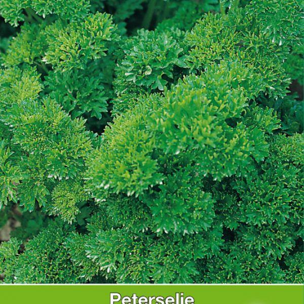 Peterselie Moskrul / Peterselinum crispum 'Moskrul'