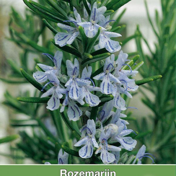 Rozemarijn / Rosmarinus officinalis