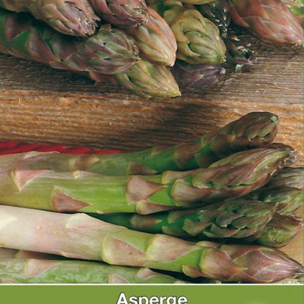 Asperge, Asparagus officinalis 'Vroege van Argenteuil'