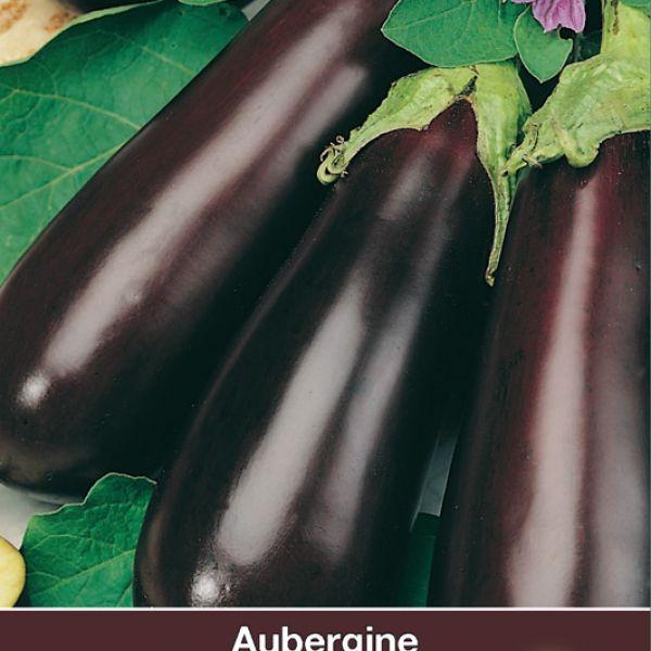 Aubergine, Solanum melongena 'Halflange Violette'