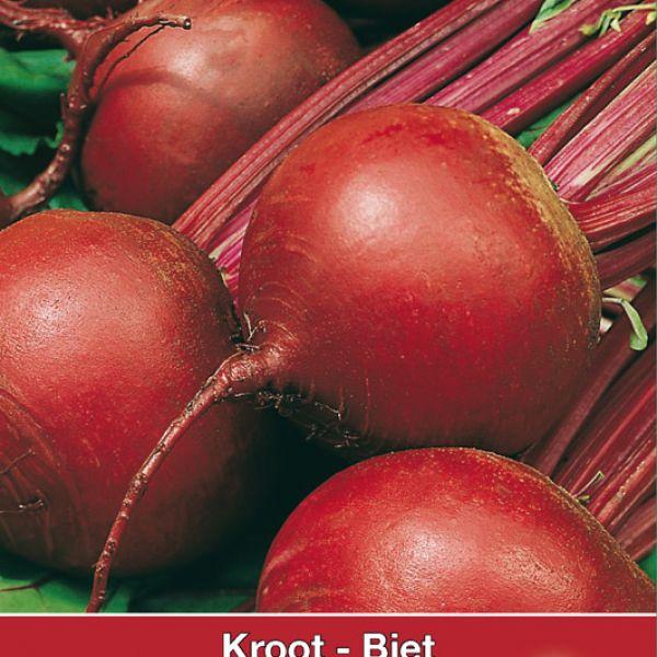 Biet - Kroot, Beta vulgaris 'Bora'