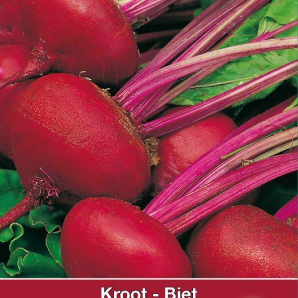 Biet - Kroot, Beta vulgaris 'Egyptische Platronde'
