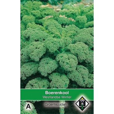 Boerenkool, Brassica oleracea sabellica 'Westlandse Winter'
