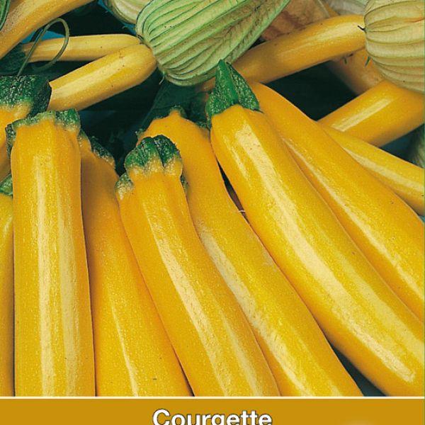 Courgette, Cucurbita pepo 'Gold Rush F1'