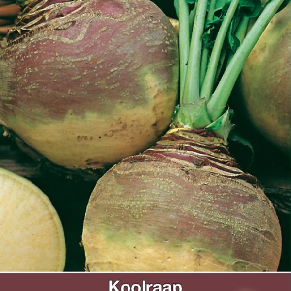 Koolraap, Brassica napus napobrassica 'Laurentian'