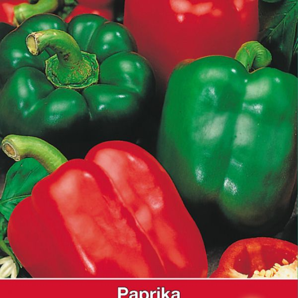 Paprika, Capsicum annuum 'Yolo Wonder'