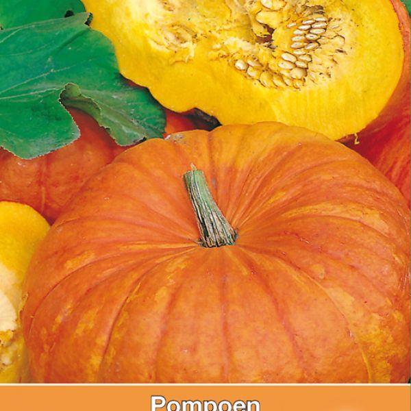 Pompoen, Cucurbita maxima 'Rode van Etampes'