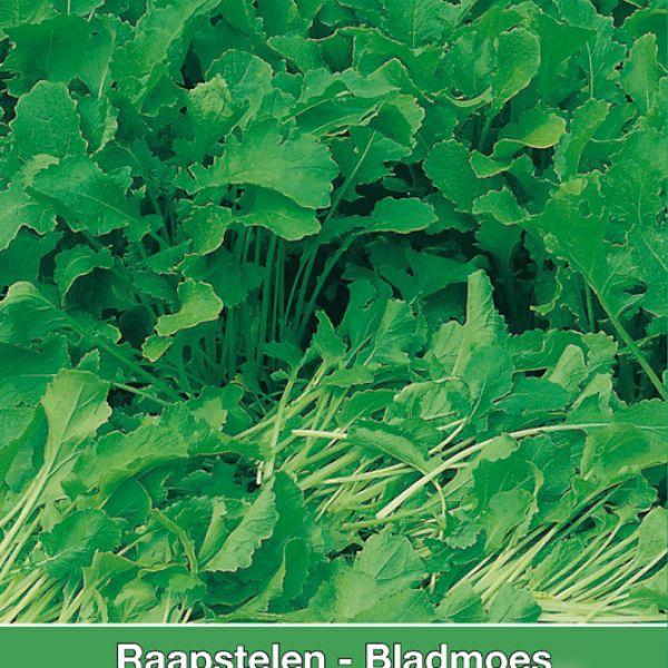 Raapstelen - Bladmoes, Brassica campestris 'Gewone Groene'