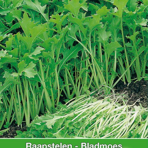 Raapstelen - Bladmoes, Brassica campestris 'Verbeterde of Namenia'