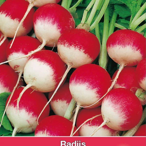 Radijs, Raphanus sativus 'National'