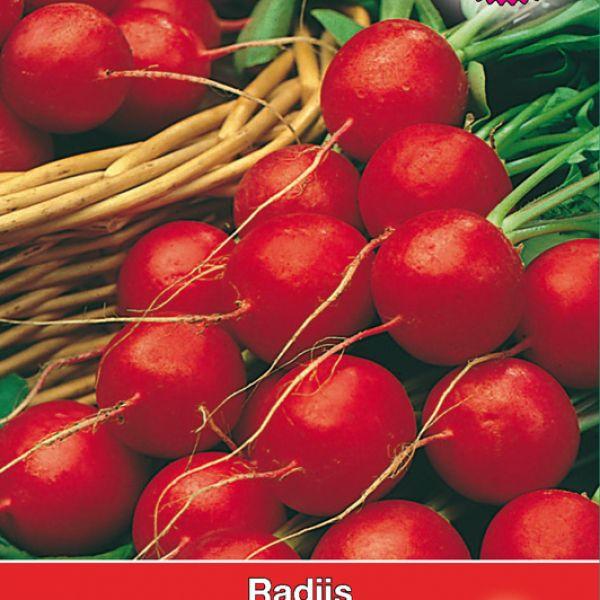 Radijs, Raphanus sativus 'Triplo'