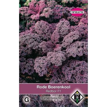 Rode boerenkool, Brassica oleracea sabellica 'Red Bor F1'