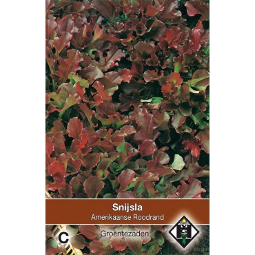 Snijsla, Lactuca sativa 'Amerikaanse Roodrand'