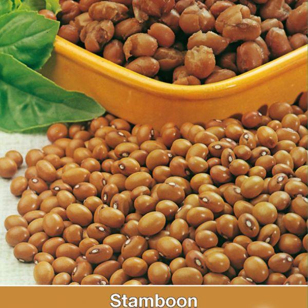 Stamboon - Bruine boon, Phaseolus vulgaris 'Bruine N.Hollandse' 30 gr.