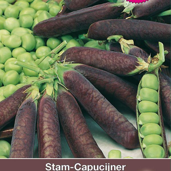 Stamcapucijner, Pisum sativum 'Lage Blauwschokker', 50 gr.