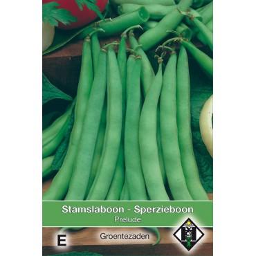 Stamslaboon, Phaseolus vulgaris 'Prelude', 60 gr.