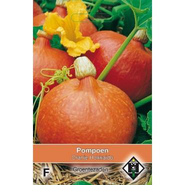 Pompoen, Cucurbita maxima 'Oranje Hokkaido'