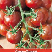 Cherry-Tomaat Black Cherry