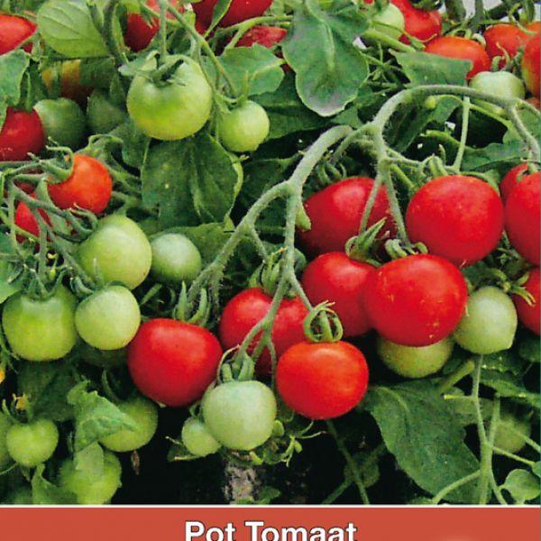 Pot tomaat Donna F1