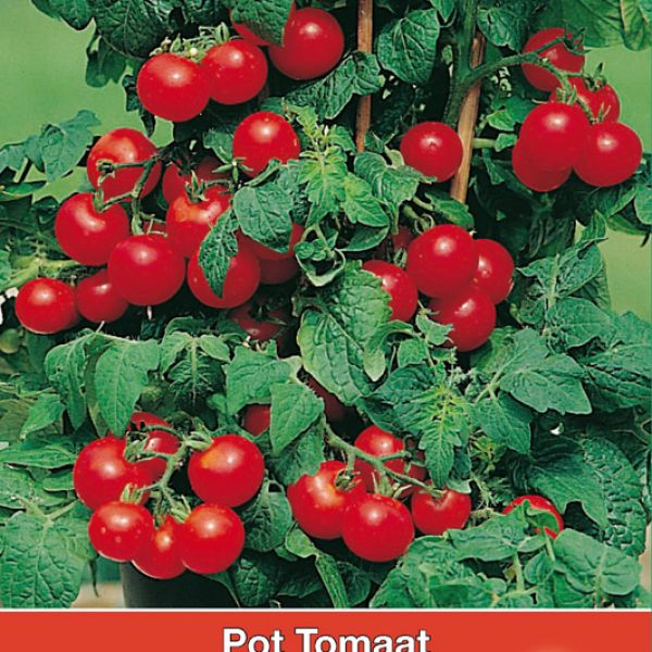Pot tomaat Ruby Red