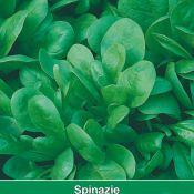 Spinazie Resistoflay, 35 gr.