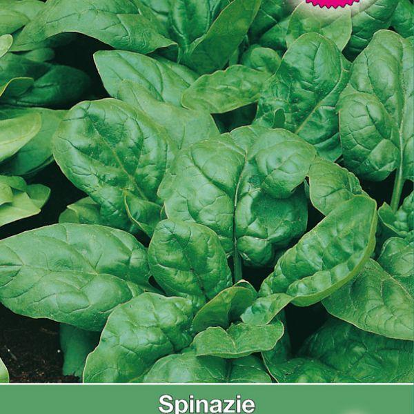 Spinazie Sharan F1, 35 gr.